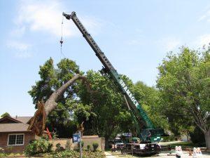 Crane life tree 0711 138