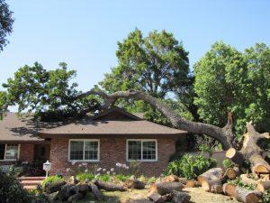 Tree on House 0711 016