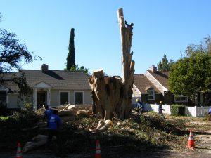A GIANT Stump
