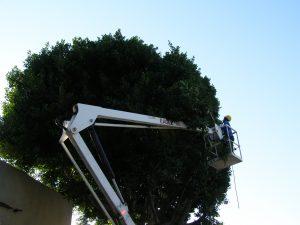 We Trim Street Trees!