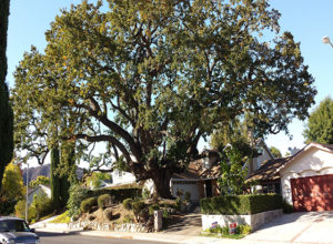 tree-triming-services-page